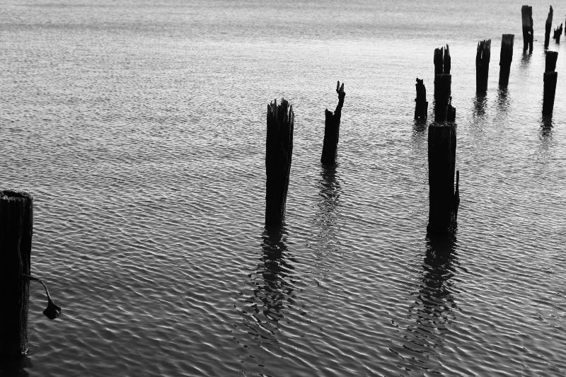 2014-11-Life-of-Pix-free-stock-photos-water-pillars-wood-calm-leeroy